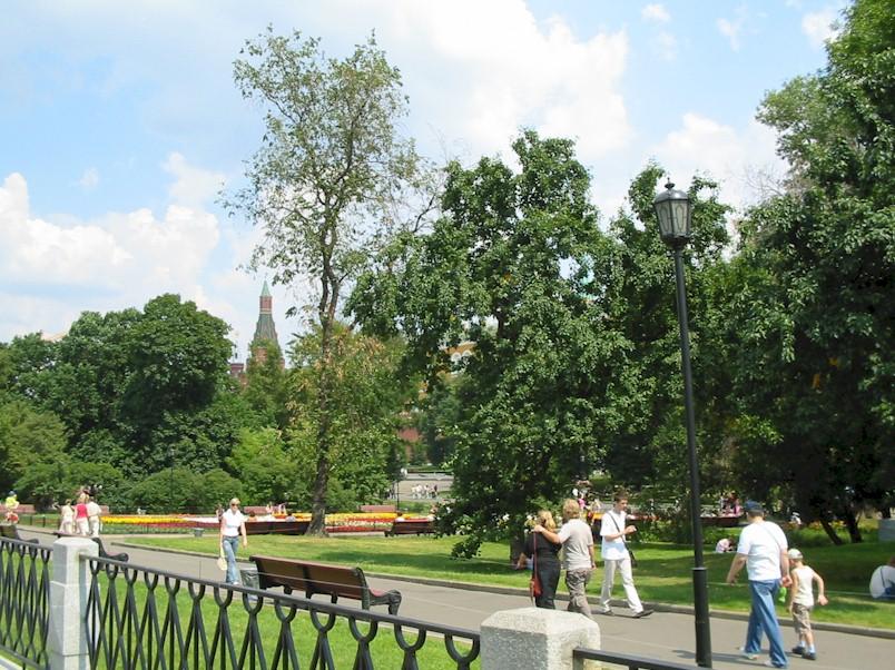 В Александровский сад будут подсажены белки